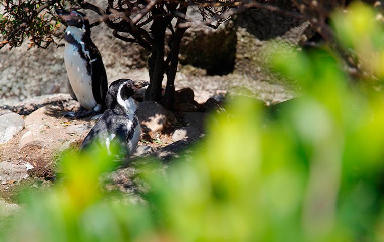 ペンギンの海02