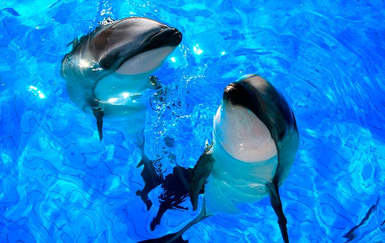 イルカの海02