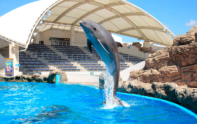 イルカの海04