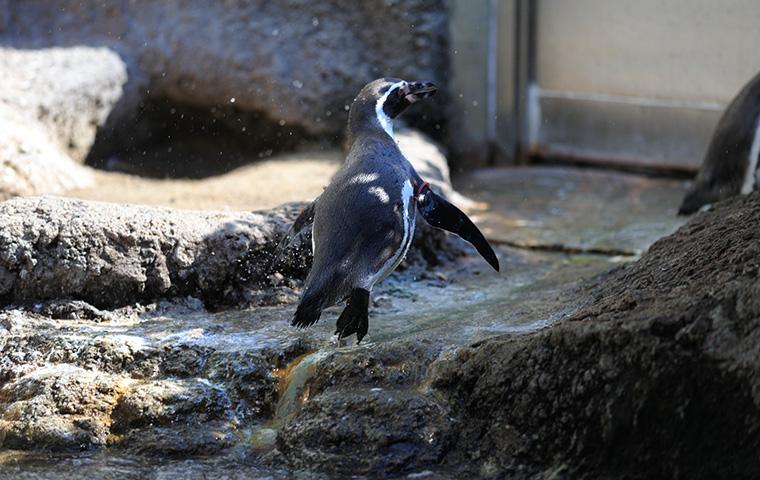 ペンギンの海05