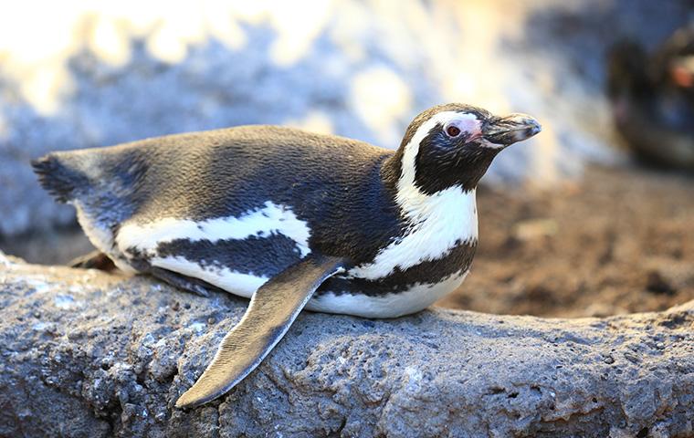 ペンギンの海07