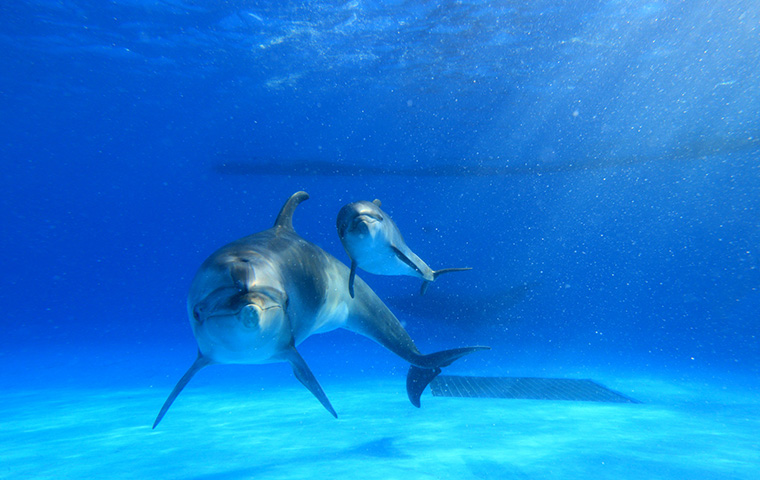 イルカの海07