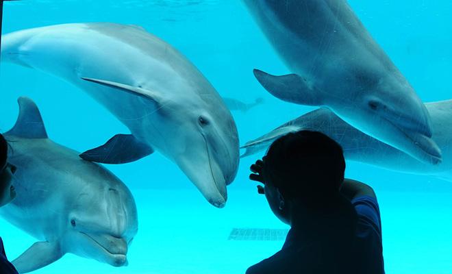 明日のスターを目指してすくすく成長中。  鴨川シーワールド生まれの子イルカ3頭が  満1歳を迎えました!!