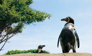 ペンギンの海