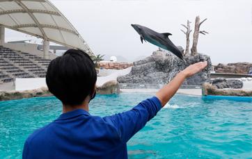 イルカの海 コミュニケーションタイム