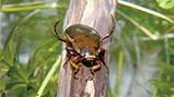 希少生物保全活動「生物多様性コーナー」