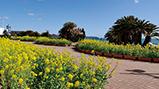 来春の鴨川シーワールドを元気いっぱいの黄色で、 華やかに彩る地元の園児と協力し「菜の花の種まき」を実施 〈菜の花レポート 2020年 Vol.6〉