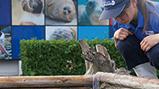 「ウミガメの浜」で保護したアカウミガメの卵がふ化
