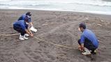 今年初めて アカウミガメの産卵を確認