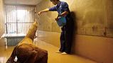 山武市で保護されたトド